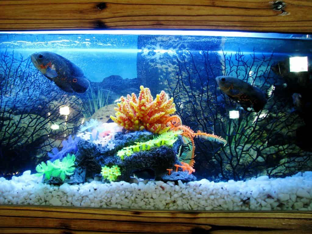 What Should You Know About Aquarium Sump