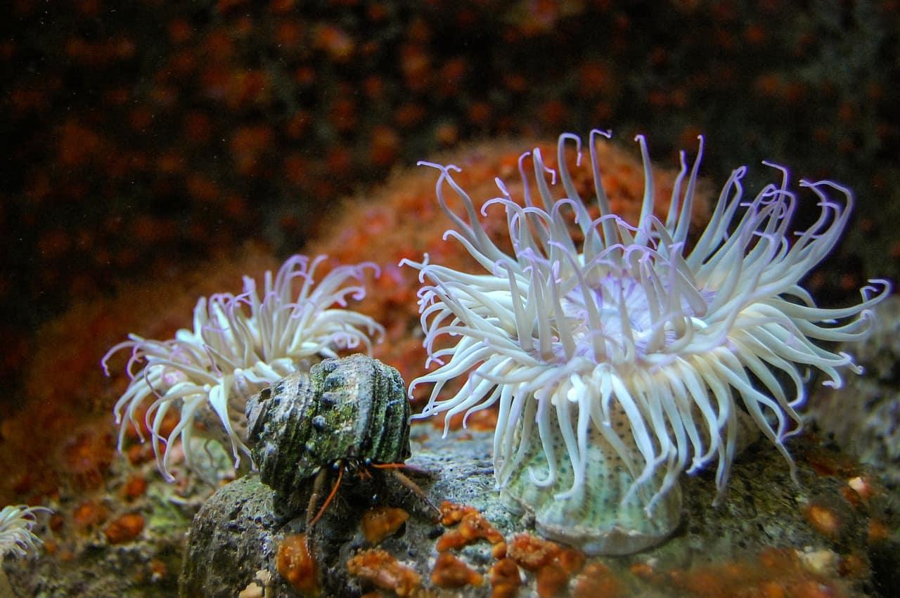 Some Best Aquarium Decor Tips