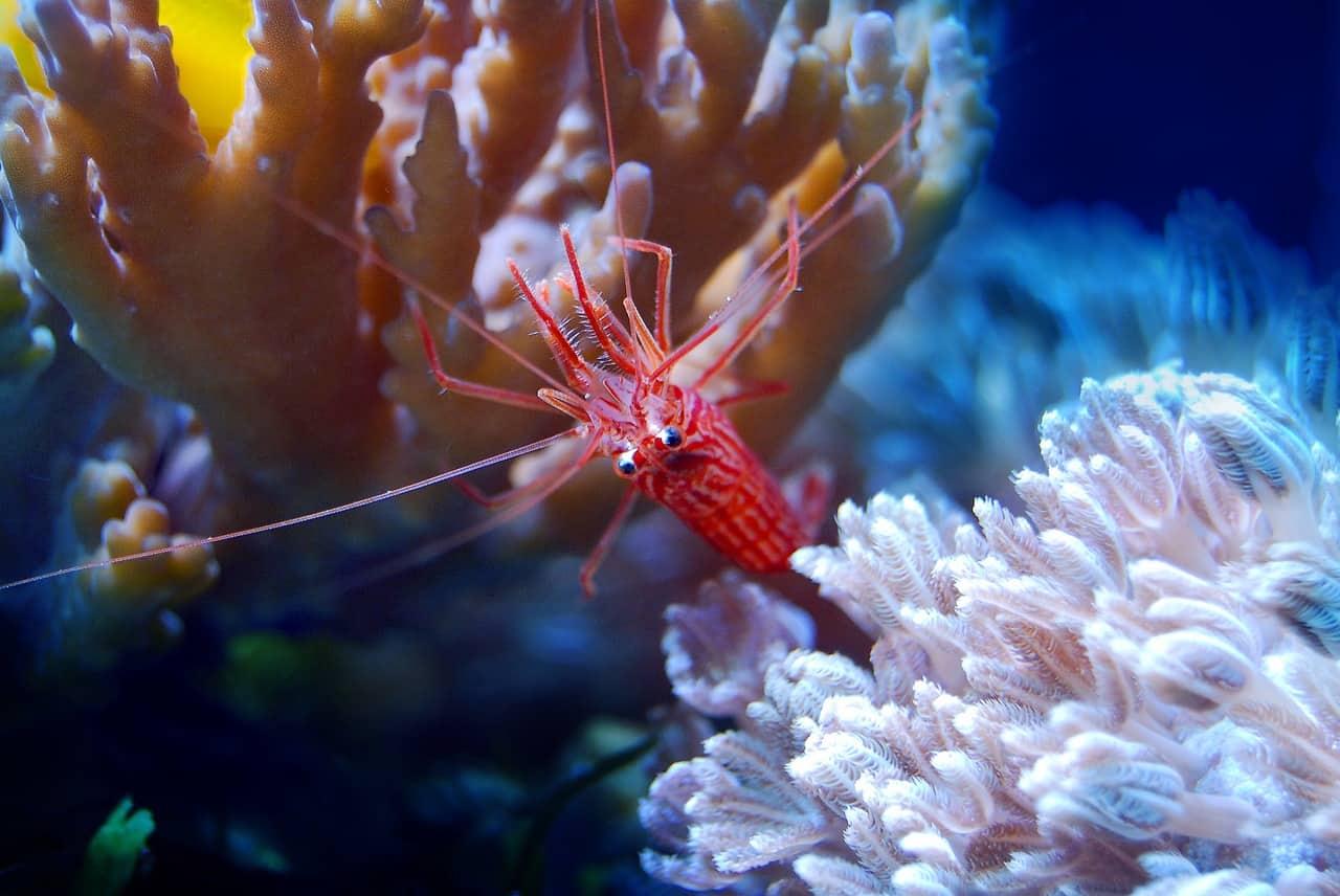 What Should You Know About Sea Aquarium