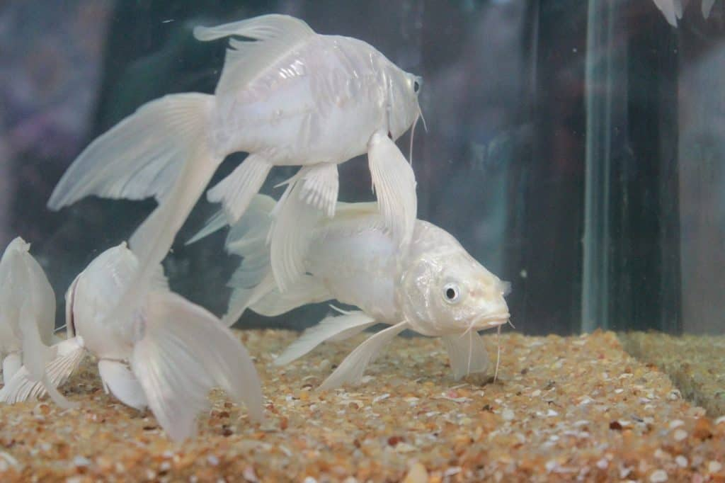 Some Cleaning Strategies Of 4ft Fish Tank