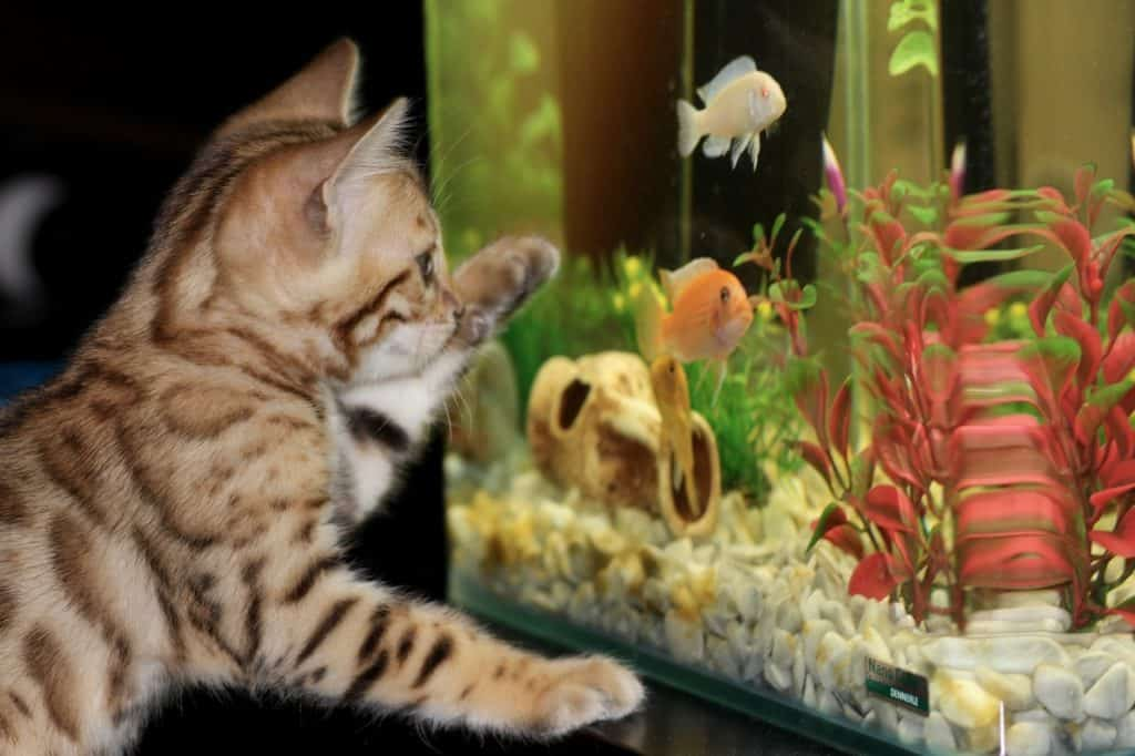 Some Important Information On 10 Gallon Aquarium