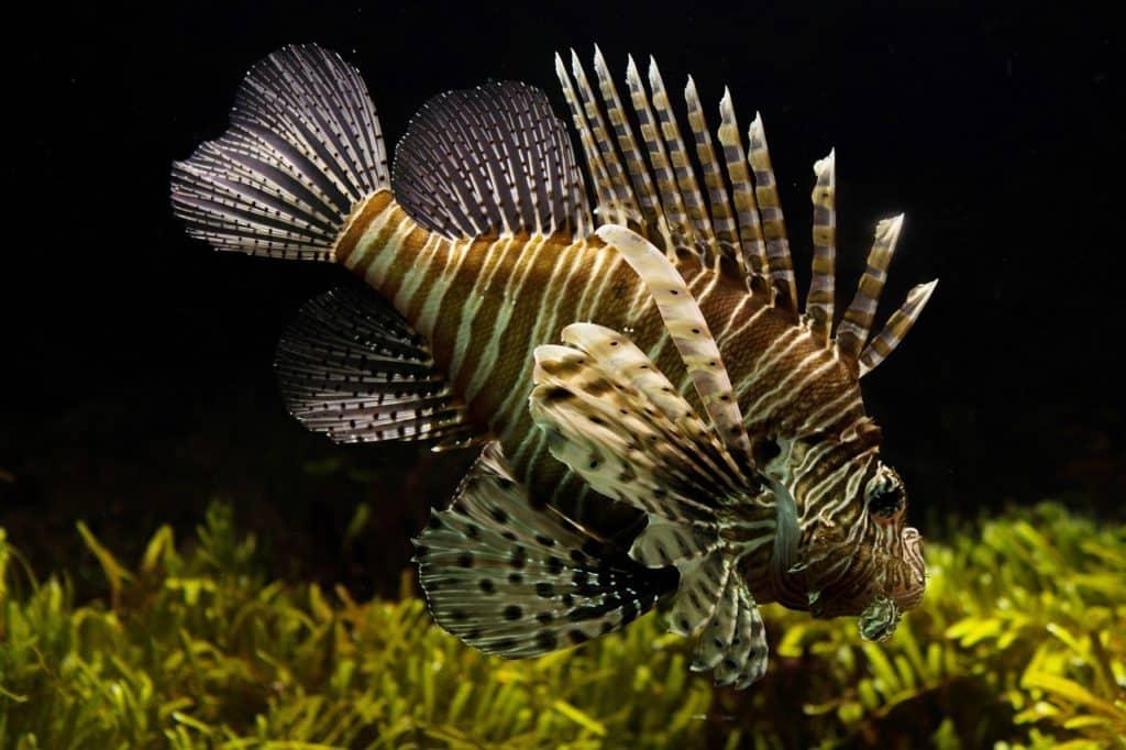 How To Choose The Best Fresh Tropical Fish For An Aquarium