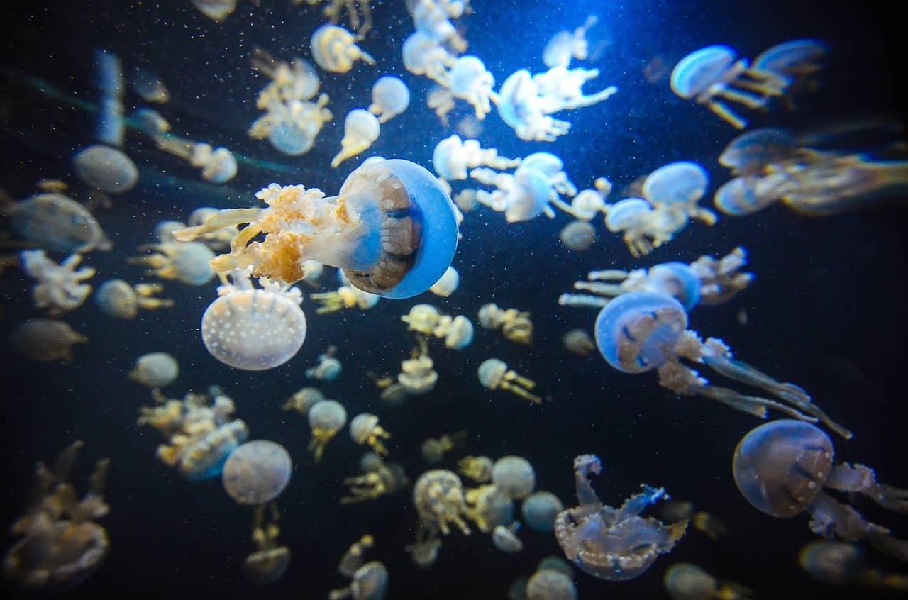 A Brief Discussion On Fluval Aquariums
