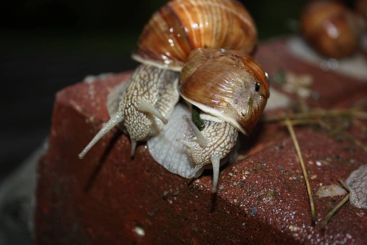 Some Interesting Information on Aquarium Snails