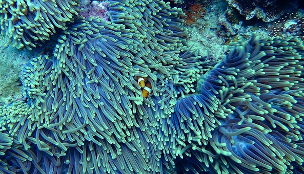 All About Corals In Your Aquarium