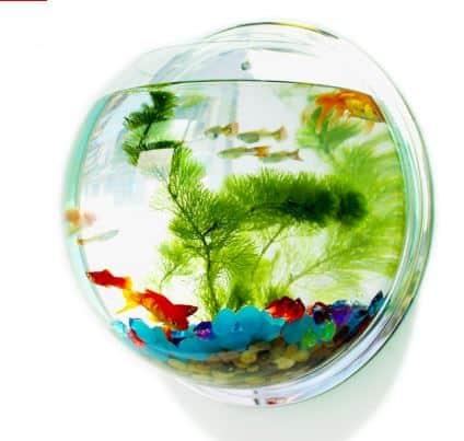 Unique Fish Tanks You Should Check Out
