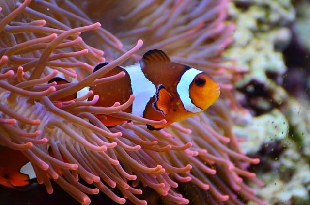 Most Expensive Aquarium Fish- Give It A Look!