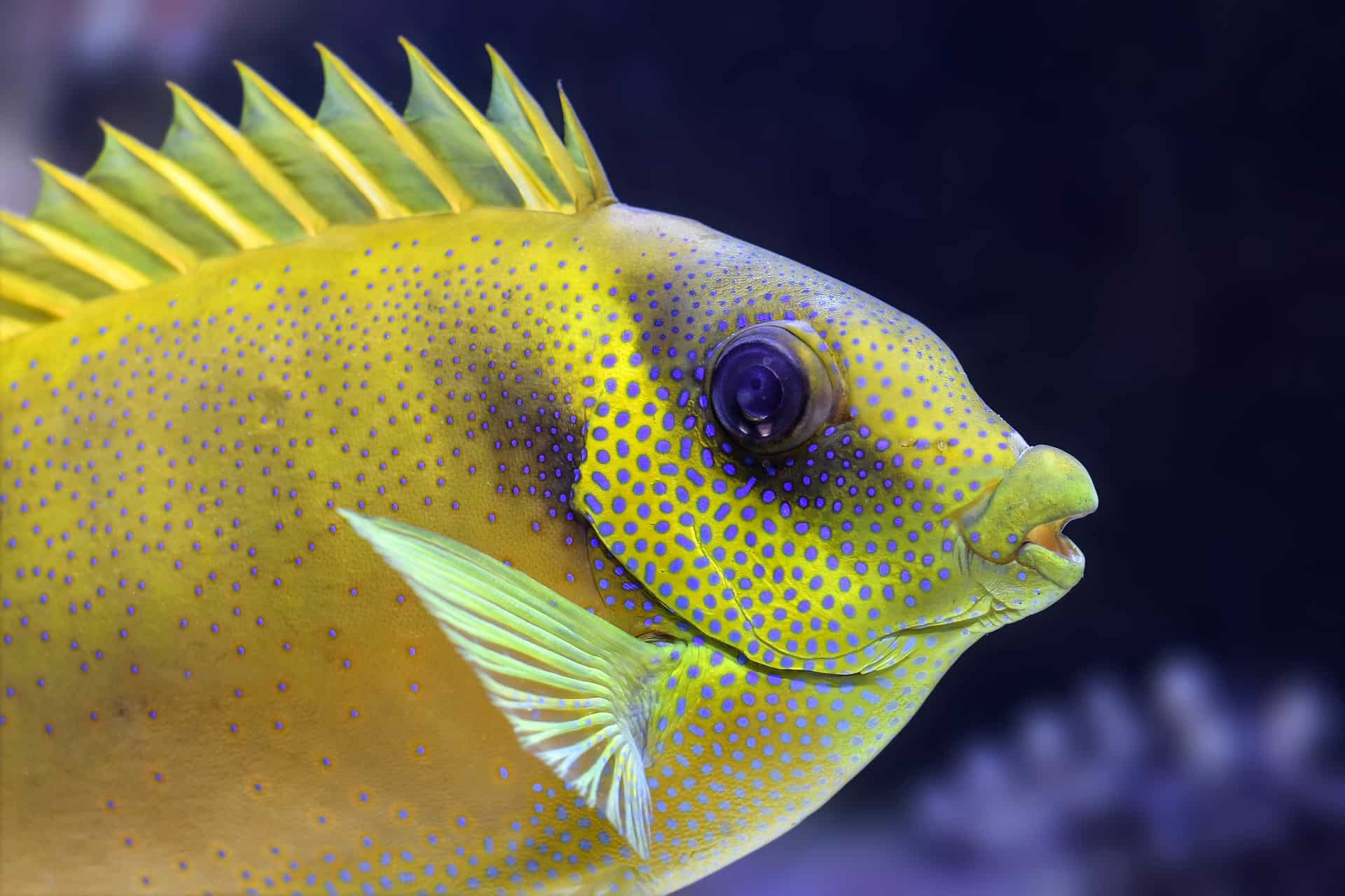 How To Care For Soft Corals In A Saltwater Aquarium?