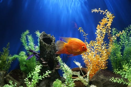 Aquarium Filters: Choosing The Ideal One For Your Tank