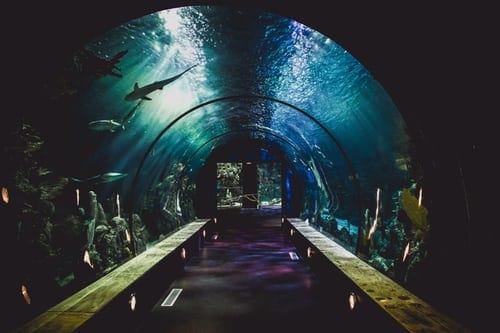 Aquarium Isolation Box For Juvenile Fishes