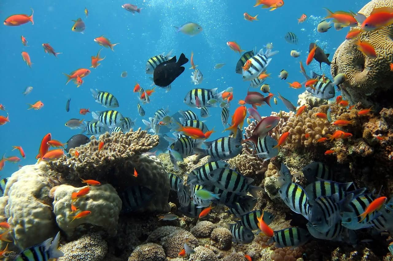 Five Amazing Aquarium Design Ideas For You