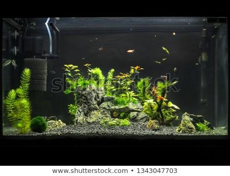 Let Us Have A Look At Some Aquarium Essential