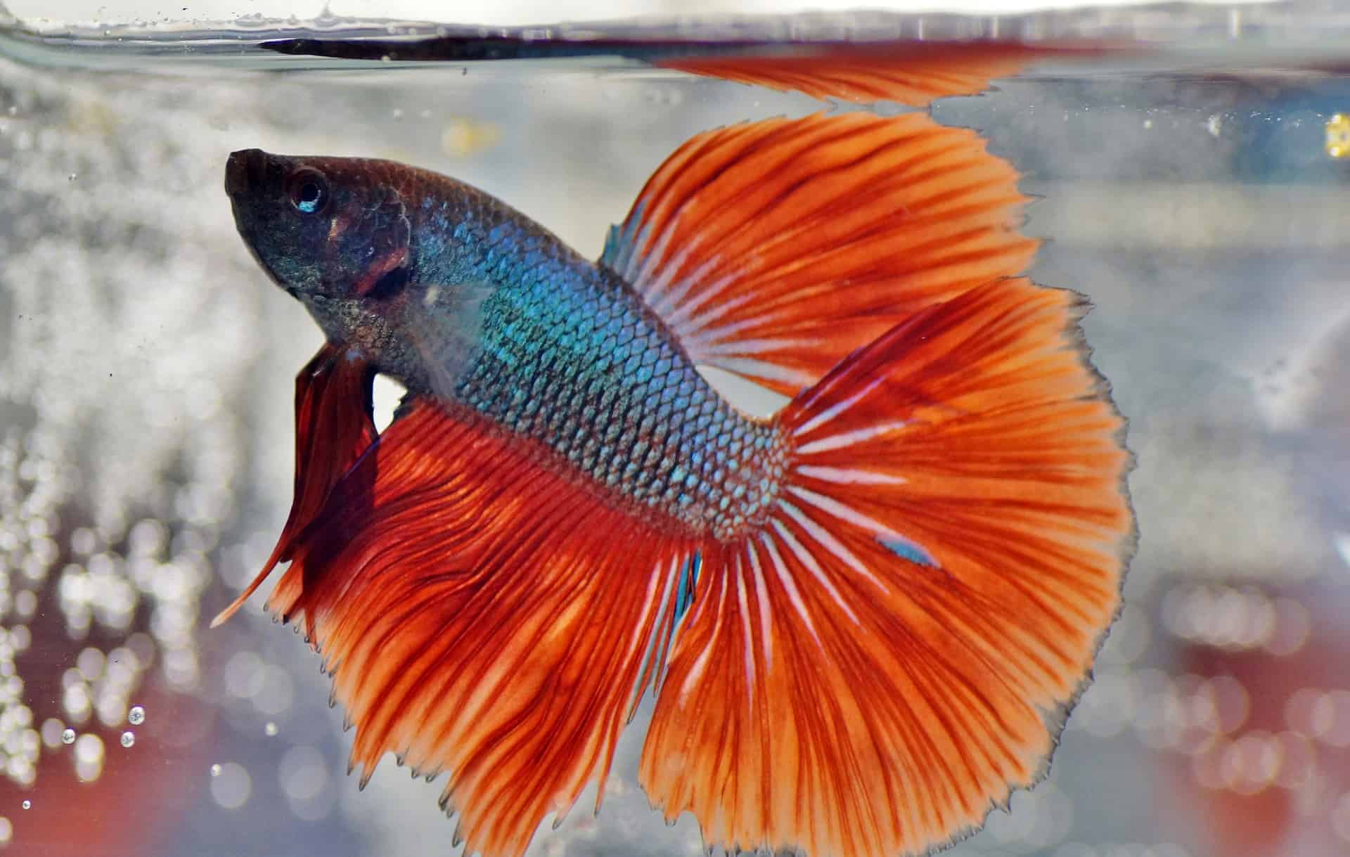 Aquarium Fish: Know More About It