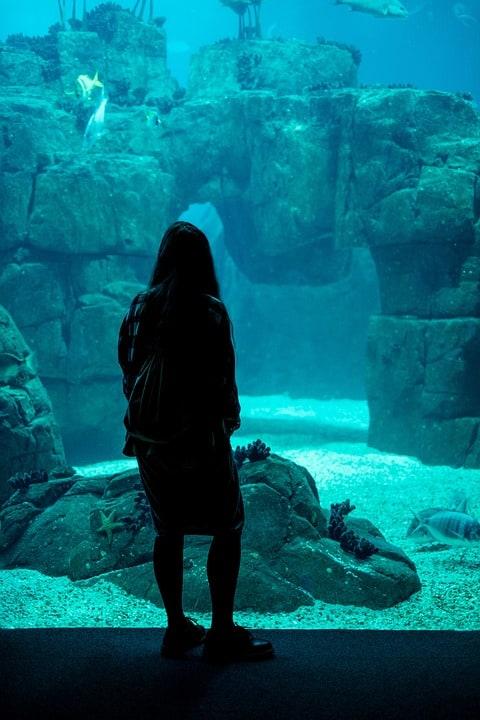 Aquarium Stands: Essentials For Keeping The Marine Life Inside Home
