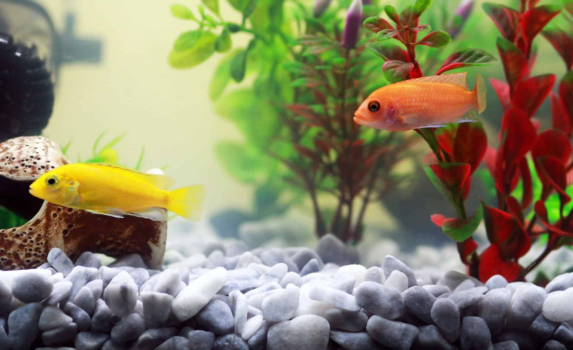 The 10 Best Floating Aquarium Plants To Know