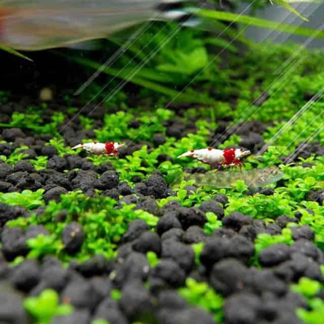 Plastic Moss Ball Filter Live Plant Holder & Plant Seeds
