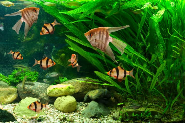 Which Are The Best Pebbles For Aquarium?