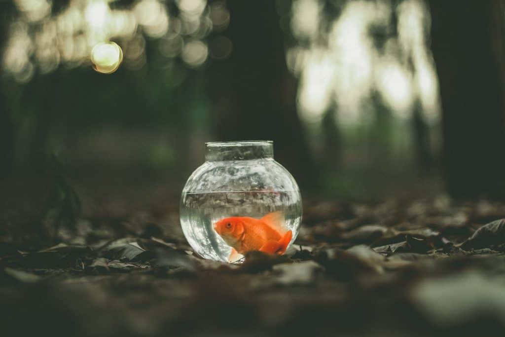Tips For Choosing The Best Fish For Aquarium