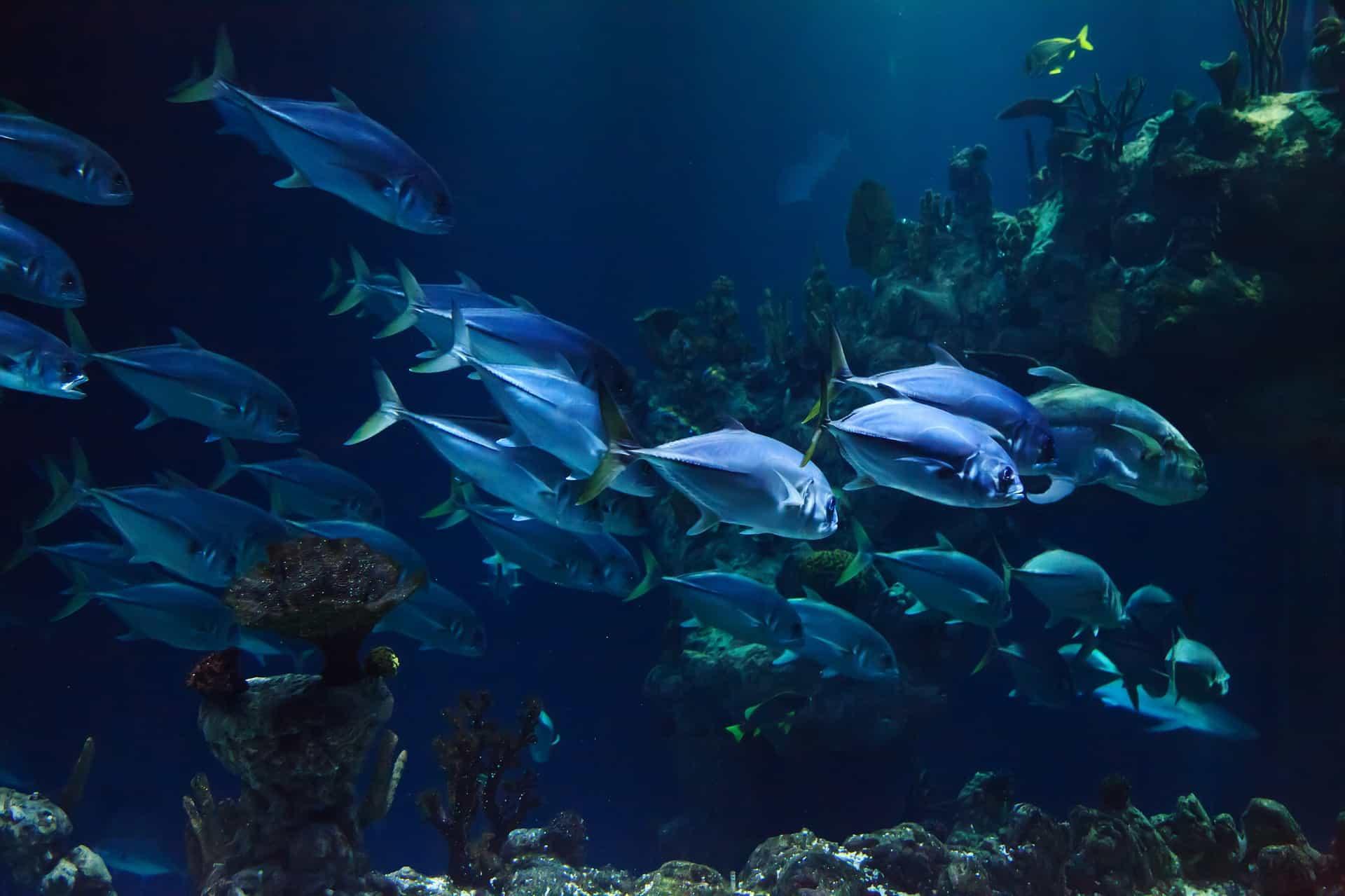 Home Aquarium Accessories