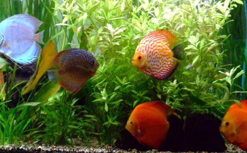 Important Things To Know About Aquarium Fish Species