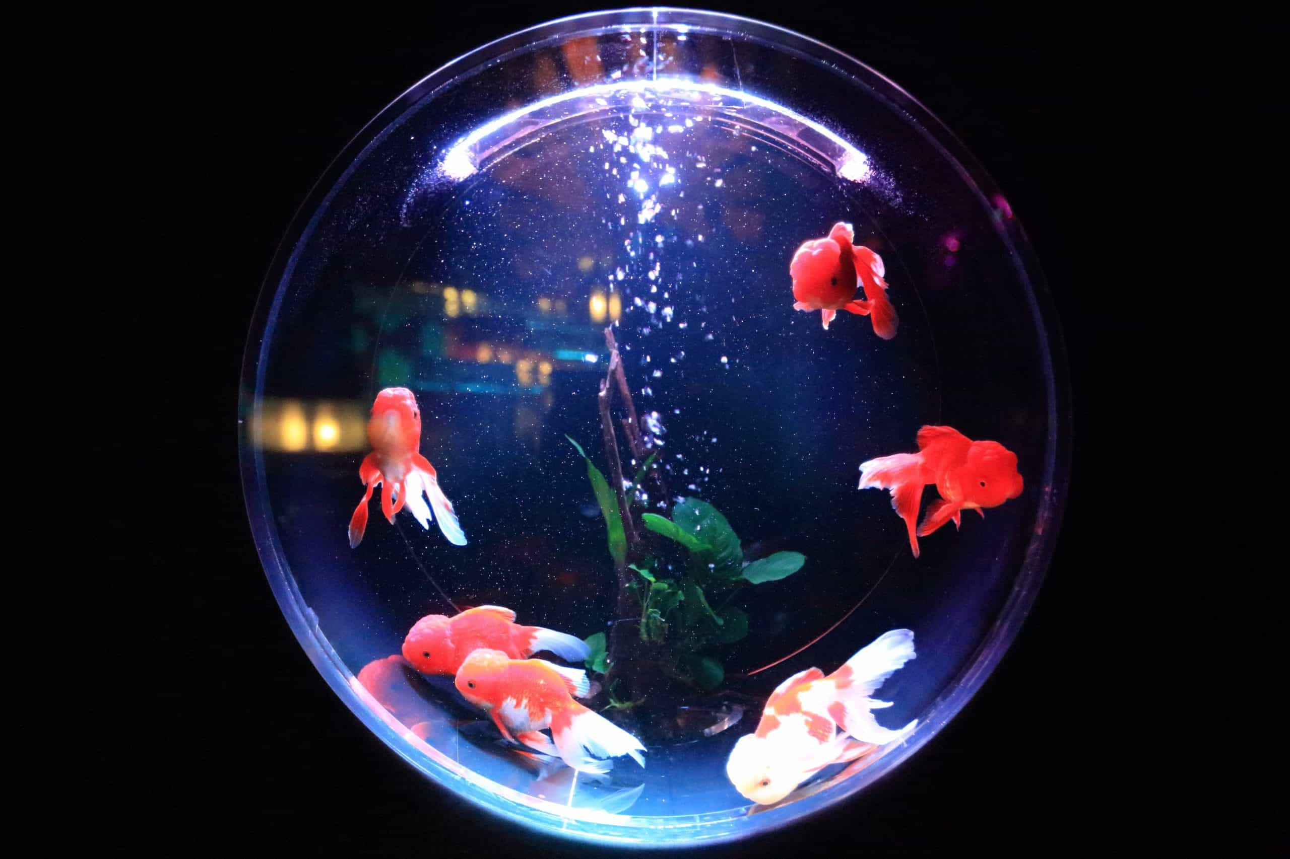 What Are The Different Types Of Aquariums?
