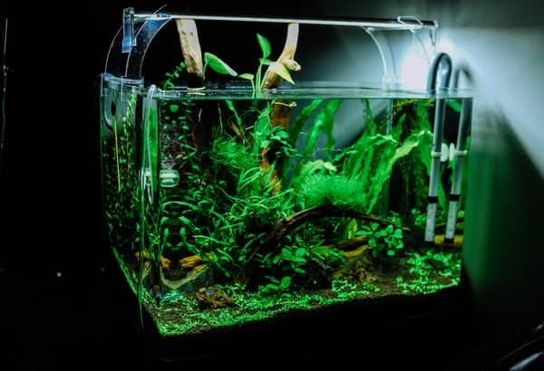 The Best Aquarium CO2 Regulator Of 2020