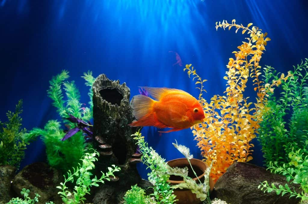 Tips For Fish Owners To Decorate Their Aquariums