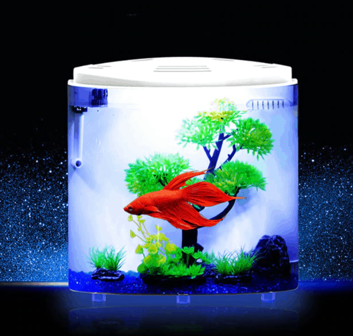 In The World Of Aquariums
