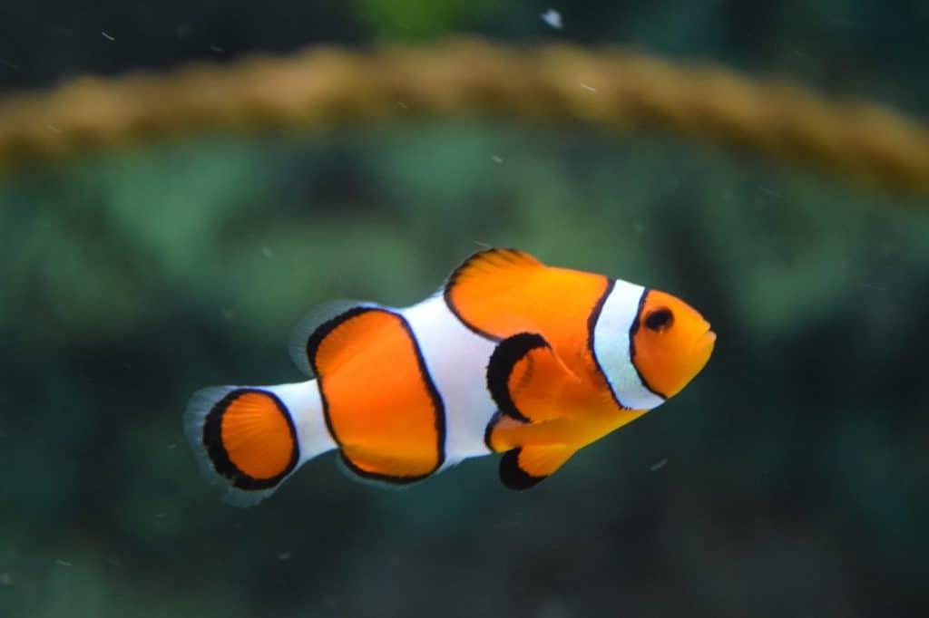 The Most Expensive Aquarium Facts