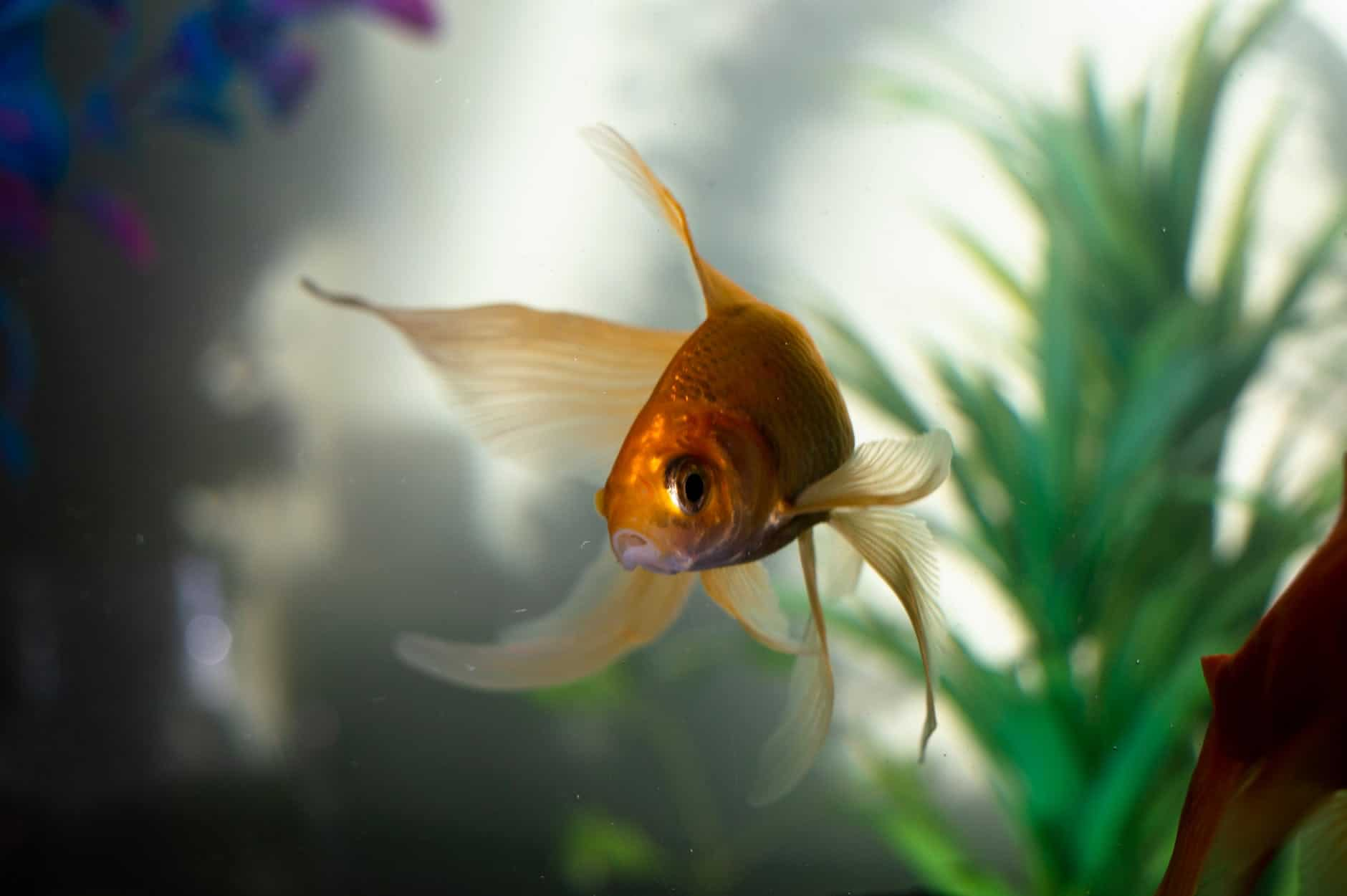 Do You Need To Buy Plants For Aquarium?