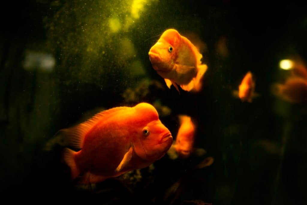 Maintain Your Freshwater Fish Tank