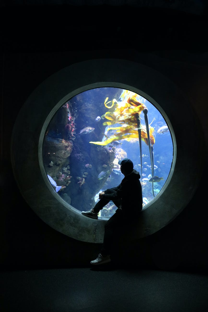 Aquarium Stands: Here's All The Info You'd Ever Need!