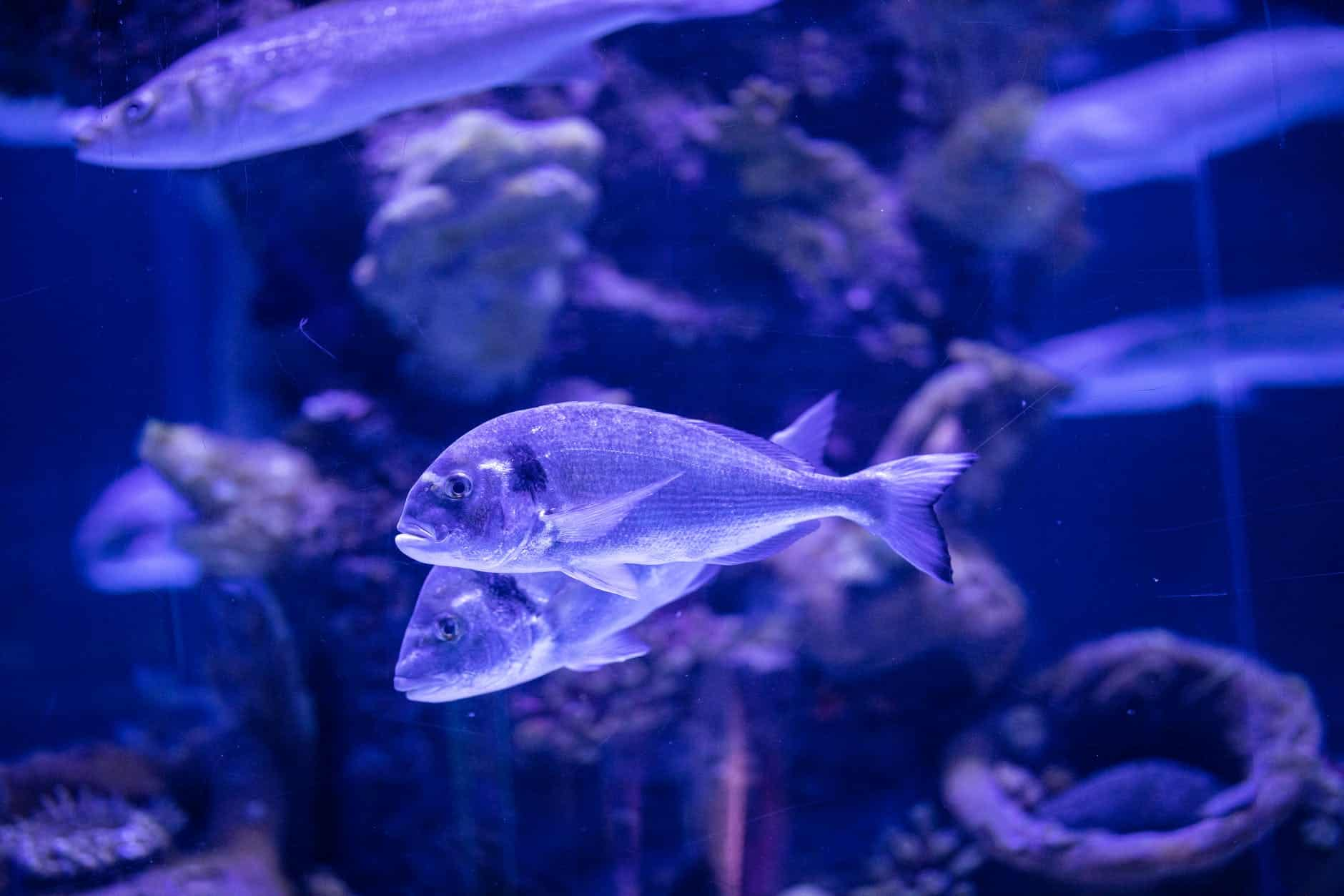 Aquarium Essentials: Here's Everything You Need To Know!
