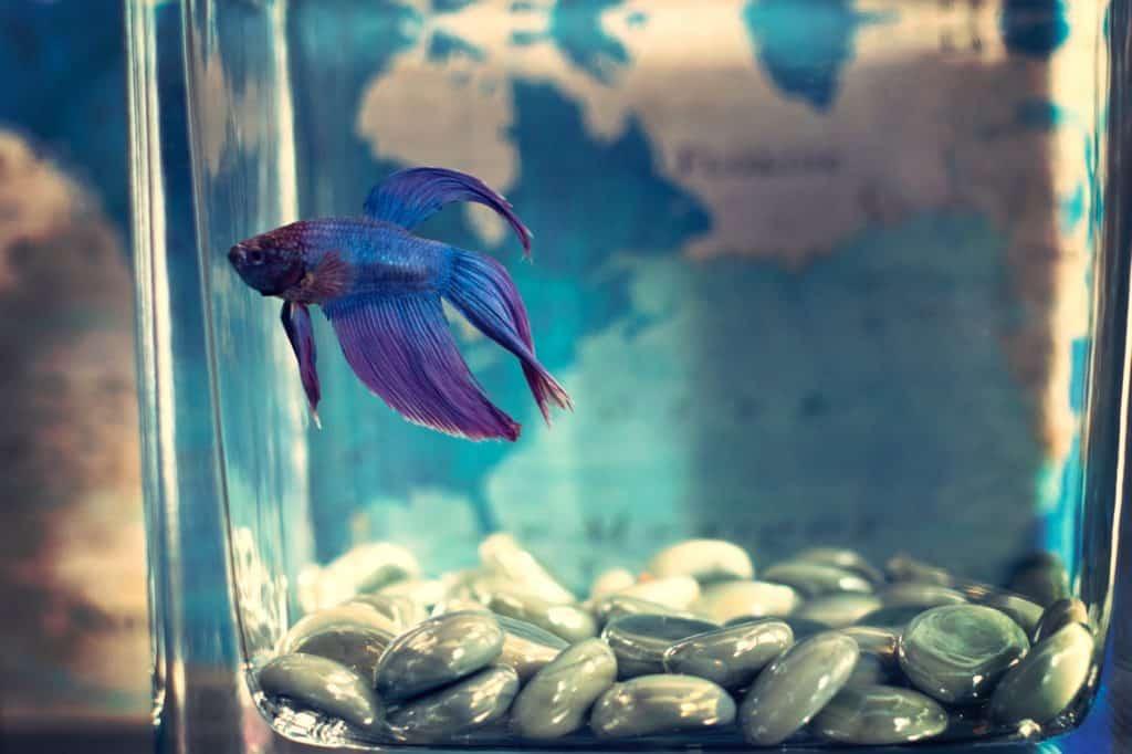 Aquarium Decoration For Fish Tank