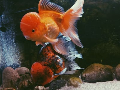 Pick The Best Freshwater Fishes