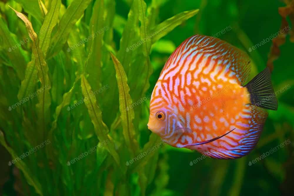 Benefits of Aquaponics: All About Aquarium