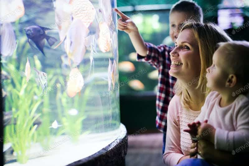 Which Are The Different Types Of Aquarium?