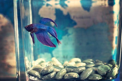 Which Are The Best Fishes For Your Aquarium?