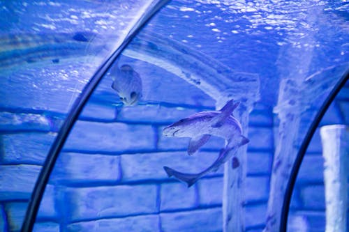 How To Choose The Best Aquarium Display?