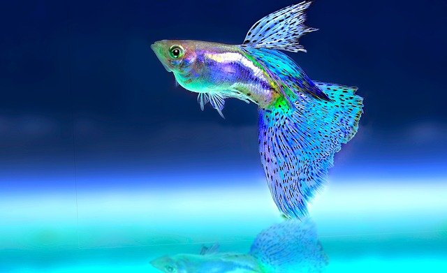A colorful fish swimming in blue water